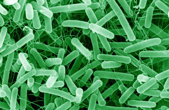 belfast anti-bacterial treatments against salmonella etc