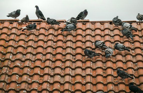 belfast bird control and proofing